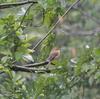 ジィちゃんと探鳥、狭山湖の野鳥/2017-10-19、その他イロイロ。