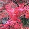 東福寺の美しい紅葉を見る!〜伏見稲荷からも近い紅葉の名所〜