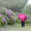 傘がない、ではなく傘をささない