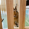 ウサギのちまき今日の3枚『日課のガリガリ』