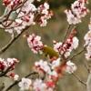~今日から新年 旧正月、節分、立春の関係~ 七十二候 第一候:東風解凍(はるかぜこおりをとく)【立春・初候】
