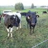 日本の近隣諸国に超巨大酪農場が乱立