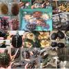 〔10.27横浜〕エキゾチックレプタイルエキスポ 出品生体