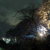 夜桜🌸 -千鳥ヶ淵-
