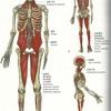 Vol.11 ほうれい線は身体からの影響を受けている。身体のAラインが改善に導く。