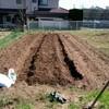 家庭菜園2年生 初のアスパラ栽培!