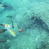 ハワイの鉄板アクティビティー カネオヘ湾沖「天使の海」 360度絶景サンドバー&シュノーケリング