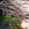 いつもの道に、桜が咲いた