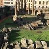 ローマ最終日は猫の楽園へ