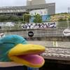 今日から野球が見れるって!神戸でジャイアンツの応援だ(その1)(337)