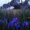 2014年5月22日㈭福島潟潟来亭囲炉裏の会に行ってきました。@田園サロンビアンカ