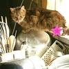 猫屋敷対策の会議を行いました。