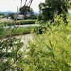 鶴の池(長野県東御)