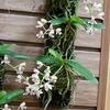 神代植物公園のサクユリと夏の花。