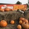 パンプキンパッチ(Pumpkin puch)