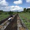 高山村の農業