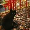 肉球の絵馬がある!黒猫に縁がある清田稲荷神社【北海道御朱印巡り】