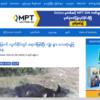 ミャンマー シャン州で牛が謎の死80頭・・が認識