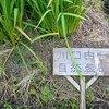 自然農:川口由一さんの自然農