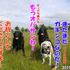ココ姉ちゃんメモリー3(2015年06月20日誕生日)