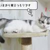 猫雑記 ~お昼寝タイム~