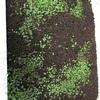水草 水上栽培 グロッソ