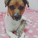 一人暮らしで犬を飼う。-元保護犬ルナとの暮らし-