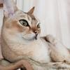 新築計画 こだわりの猫やぱさんが選ぶ最高の家電なの 一章