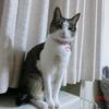 28日はやっぱり短いおネコさま。