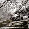 曼殊院門跡の雪景色@2019