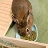 ウサギのちまき今日の1枚『食い意地』