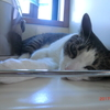 監視業務もやってられないおネコさま。