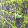 高円寺の美苔スポット