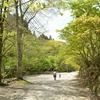 【GW 道志】 ガラガラの道志の森キャンプ場で日帰りキャンプ 1才10ヶ月