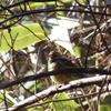 「四方山探鳥会/野鳥の会宮城県支部」で、色んな野鳥を撮影! 2/24、その2