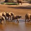 象がアフリカの大地を歩く、それだけで感動する世界 ケニア サンブル保護区