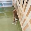 ウサギのサークル柵かじり防止策を見つけた♪