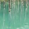 春色パレット~雨の日の青い池