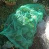 庭で育てる小松菜と春の畑の準備 ☆  Nさんとのじゃがいも話