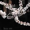 君と見た桜は美しかった