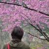 咲くら遊山2015 仁淀の桜