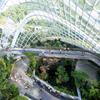 シンガポールといえばガーデンズバイザベイ Garden's by the Bay