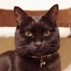 今日の黒猫モモ&白黒猫ナナの動画ー824