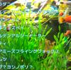 【日本淡水魚】ガサガサで採れるカワムツやチチブ、ヨシノボリが好む人工餌