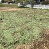 秋冬野菜専用エリア、春夏野菜エリアを耕耘しました