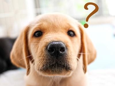 """よくある質問【動物病院様向け】-「ペット医療費あと払い」機能 """"みるペットPay""""について"""