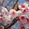 太田道灌とは⁉お墓巡りと山吹の花!江戸城を造った漢の終焉地