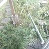 竹を切りました。
