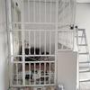 ペナンで「籠の鳥」
