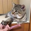 猫と目薬と龍拡散ダイレクト
